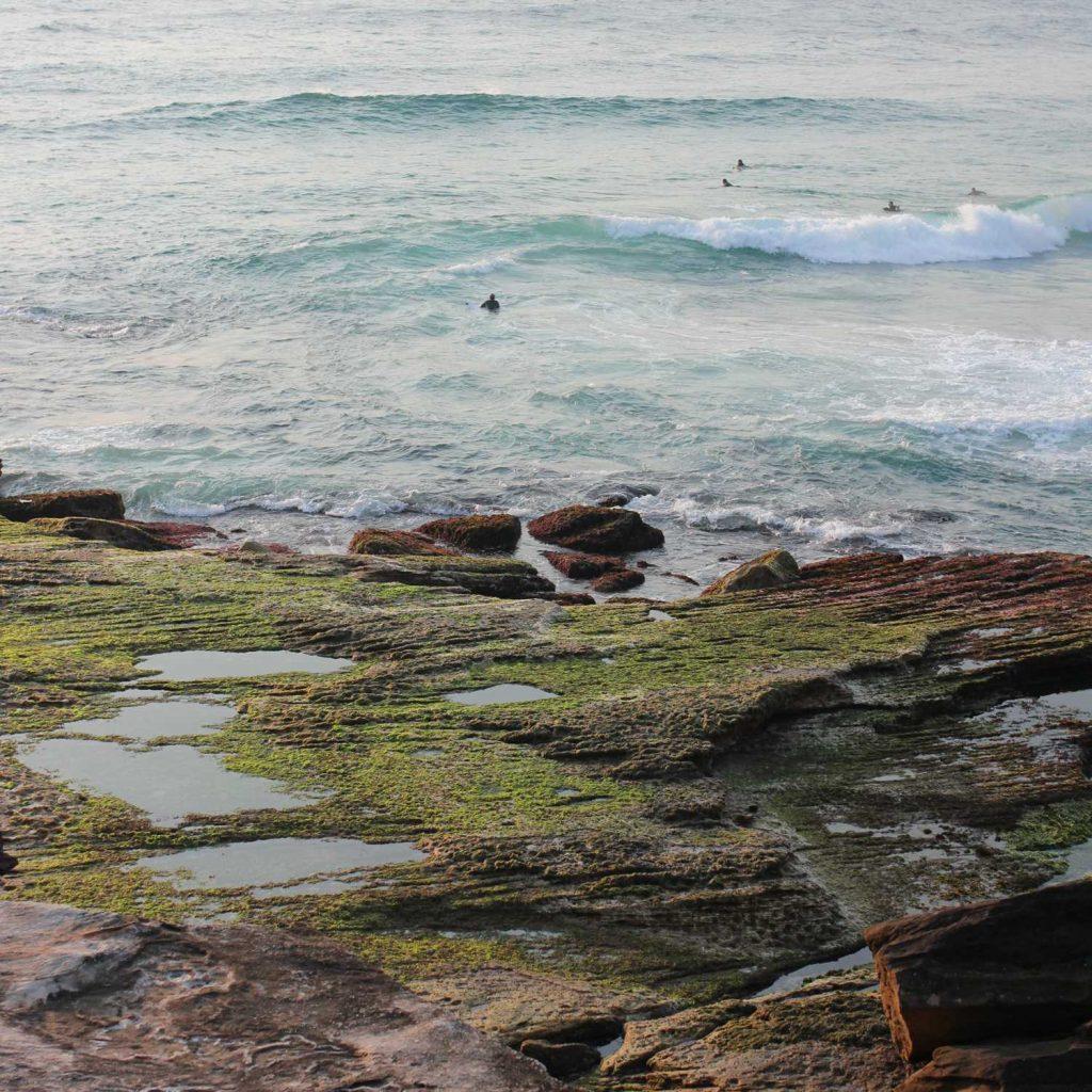 Seaweed on the Seashore