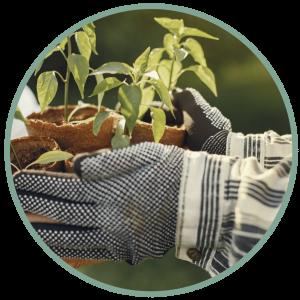 Seedlings in Plantpots